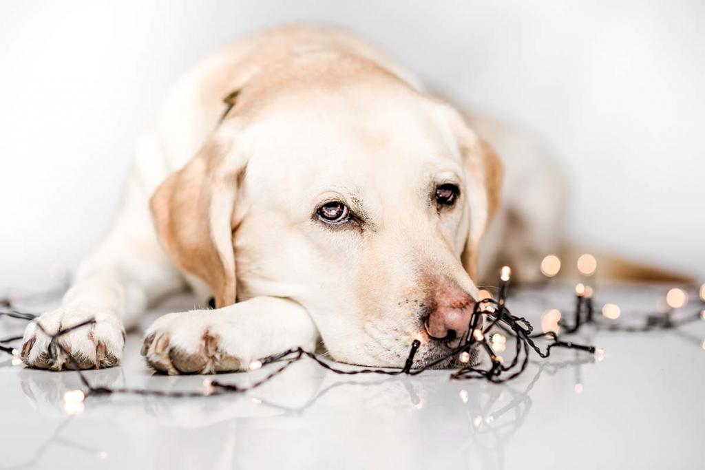 honden fotograaf Marty Kooman Marty's Vision Kapelle Zeeland Holland Goes fotografie dieren