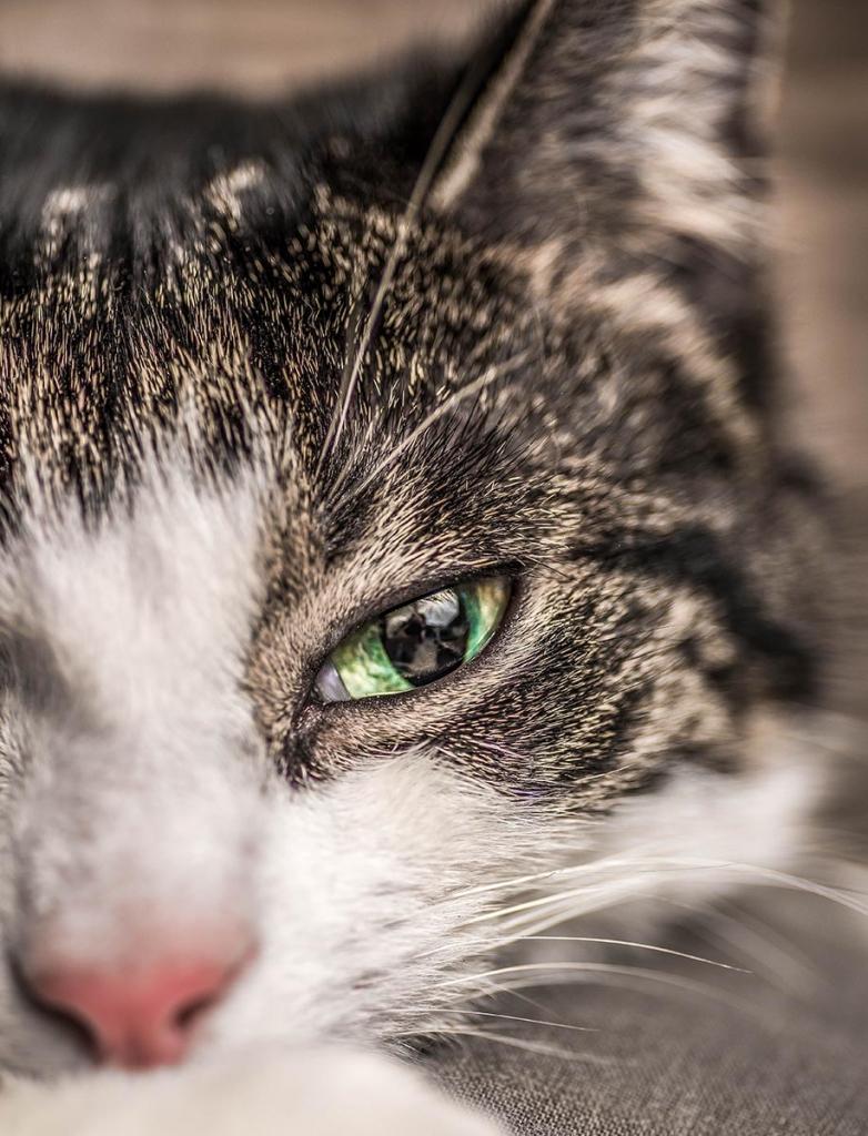 katten kat poezen fotograaf Marty Kooman Marty's Vision Kapelle Zeeland Holland Goes fotografie dieren
